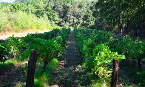 Lestelle de St-Martory : Sentier des Vignes