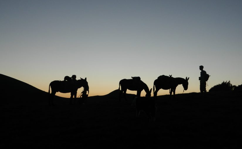 Balade à dos d'ânes