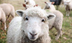 La Ferme à laines