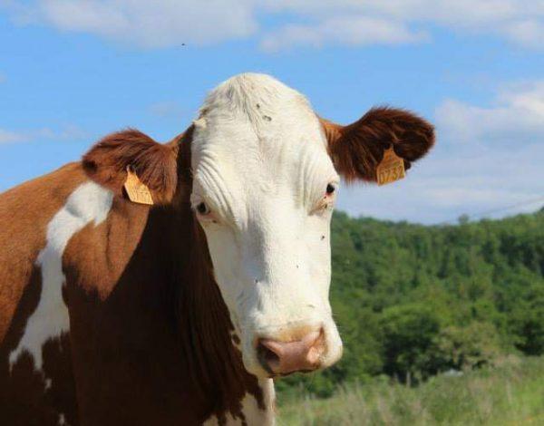 Montespan : Rencontre avec un fromager – EARL La Ferme du Couquet