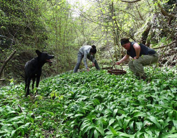 Reportage : Marlène fait la cueillette de l'ail des Ours
