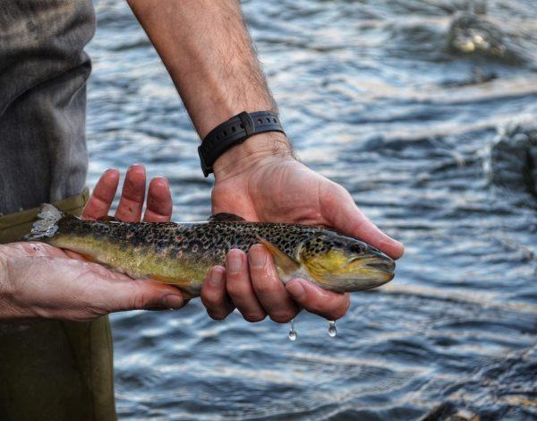 Passion pêche : retour aux sources